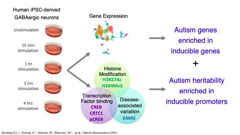 Study offers new insight about gene expression and neurological disease heritability